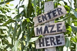 corn_maze